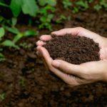 Doğal Çim Alanlarda Gübreleme İşlemi